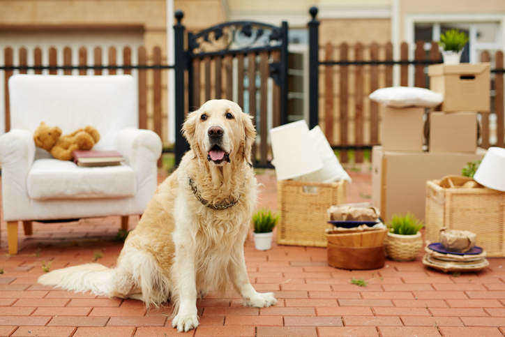 Moving with a dog - Neighbor Blog