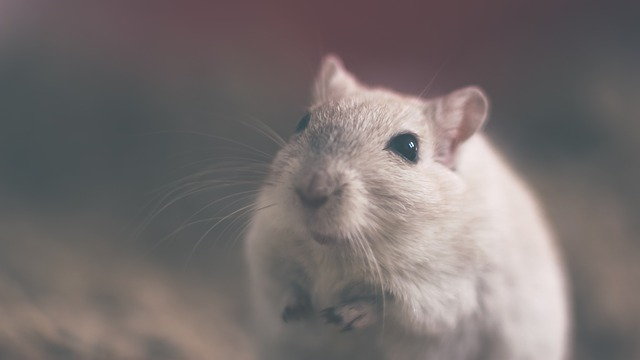 Mouse in Climate Controlled Storage