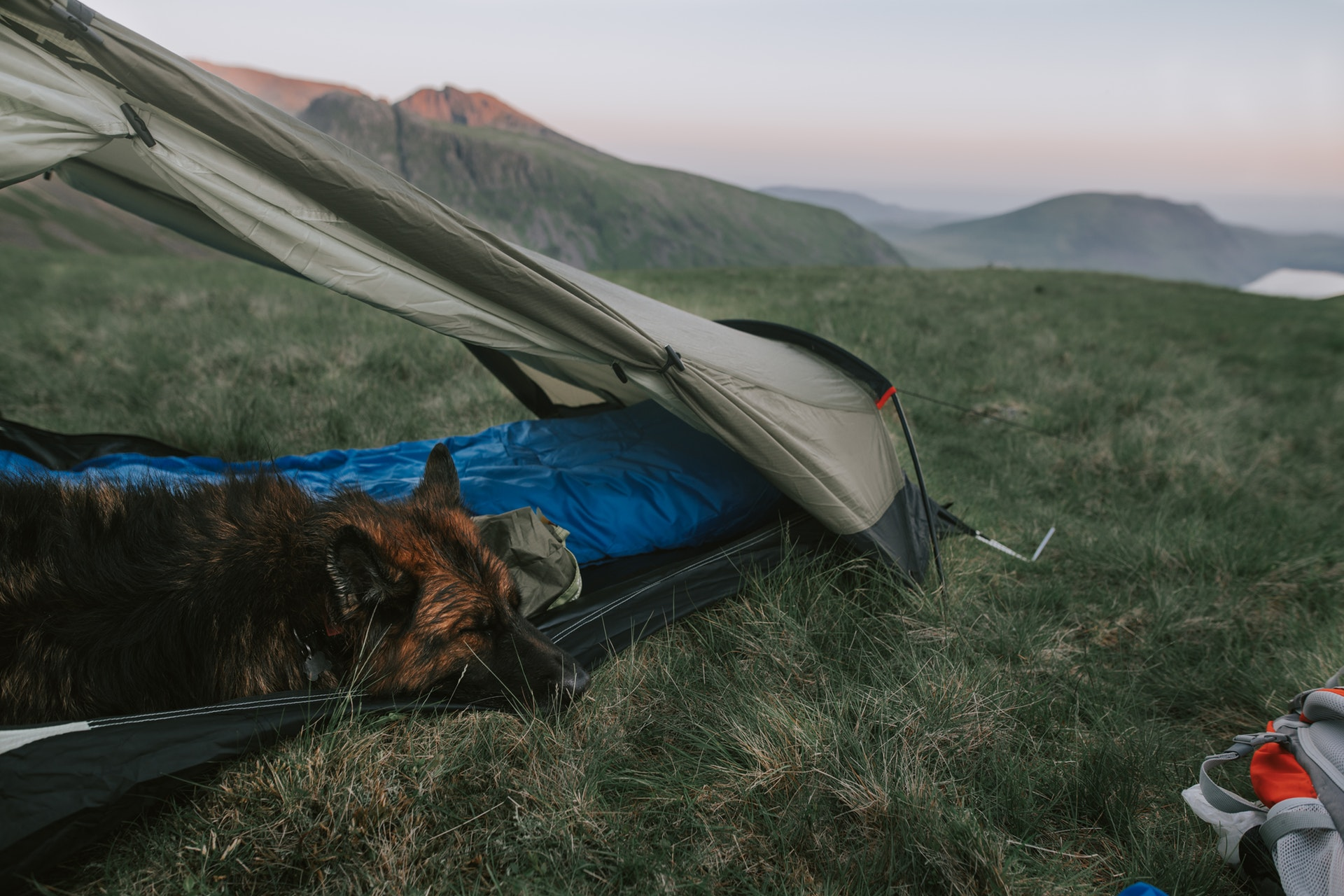 Dog and tent