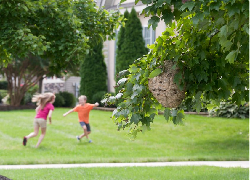 children playing in a lawn with a wasp nest