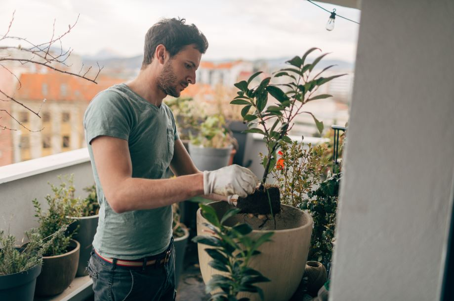 man transferring a growing plant to a larger container in his urban garden