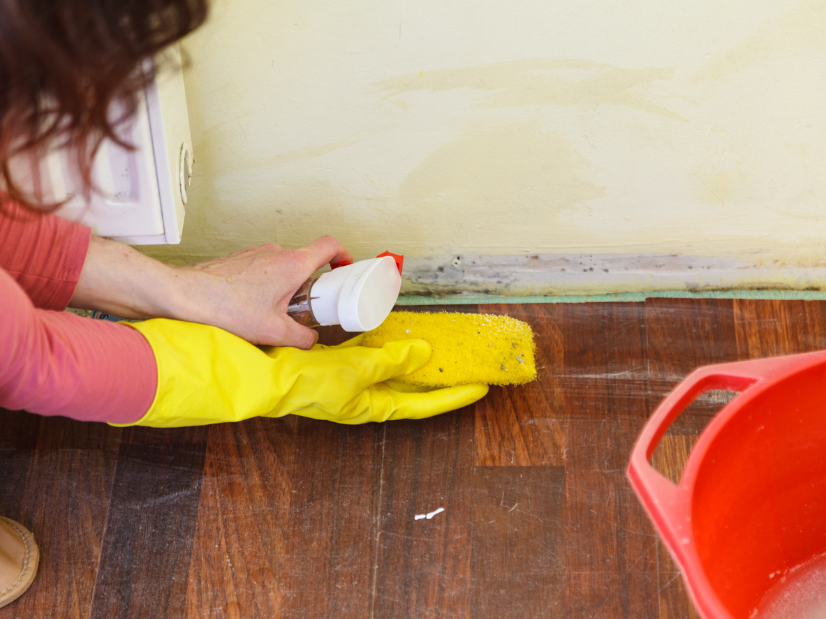 someone applying antifungal and mold cleaning chemicals in a room before reinstalling the trim
