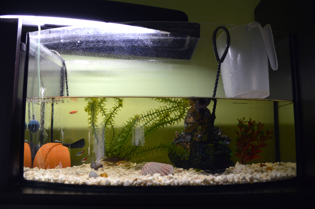 a half-full fish tank being emptied for a big move