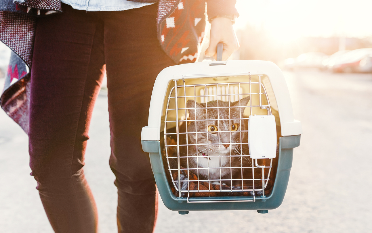 cat in a travel carrier on moving day
