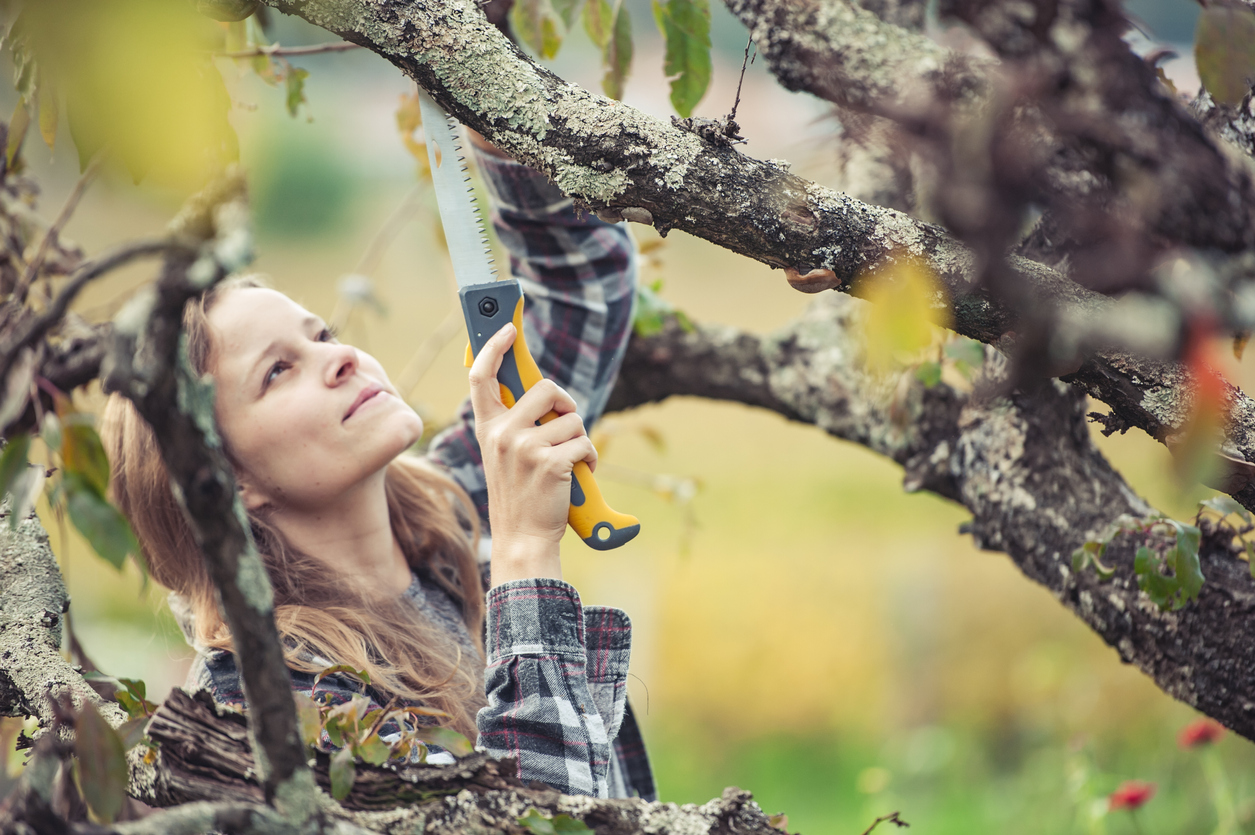 young woman trimming a fruit tree in the late fall