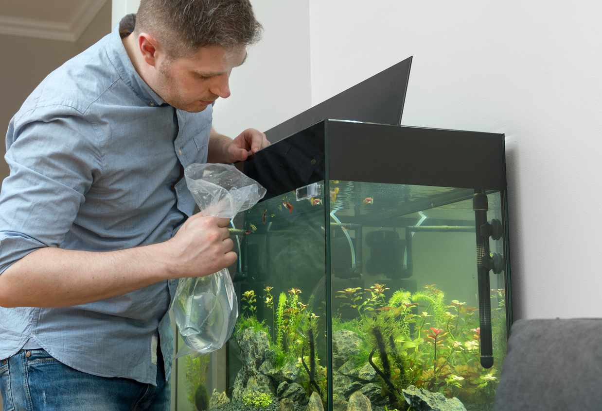 man starting to remove the fish from an aquarium before emptying the tank